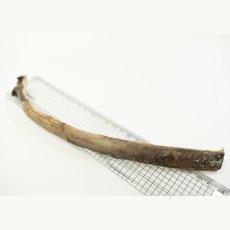 画像3: エゾ鹿 ロングボーン 160g  (3)